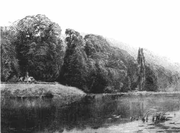 Cliefden Woods