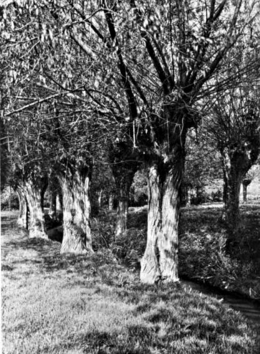 1910: Under the willows, A backwater near Wargrave