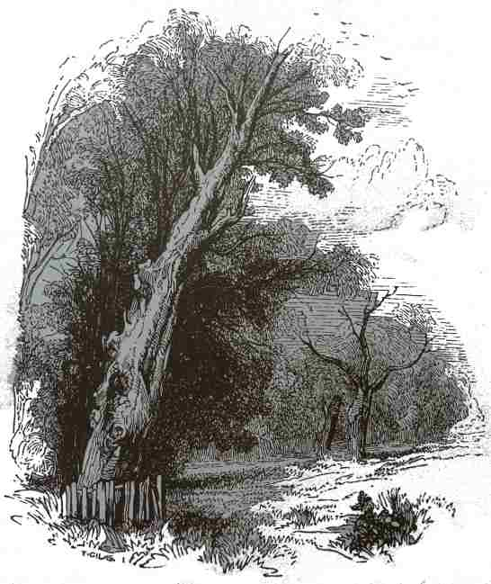 HERNE'S OAK: THE LATER